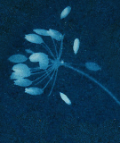 Tête de lit Bleu Coco Hellein Sifnos
