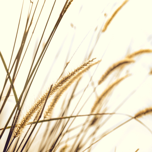 cereales-bio-paysage-champetre