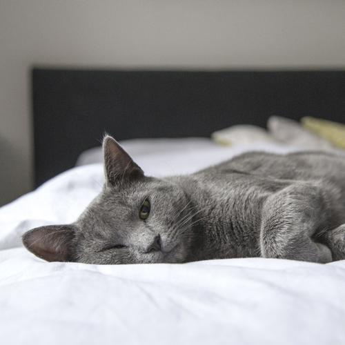 chat-zen-animaux-calme-chambre
