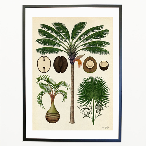 katie-scott-illustration-palms-jungle