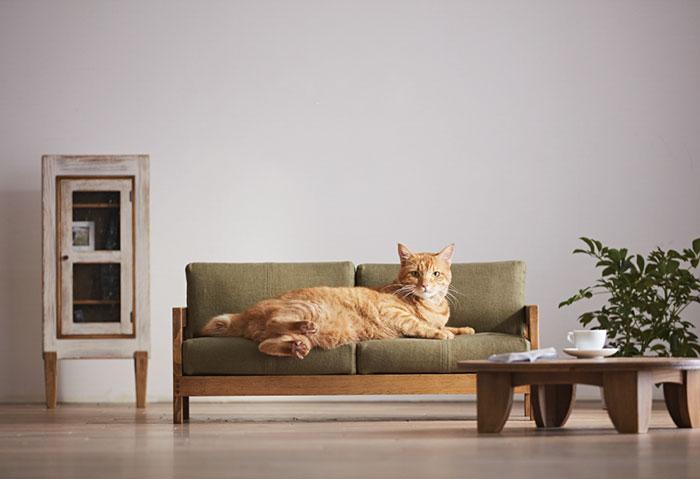 lit pour chat japon