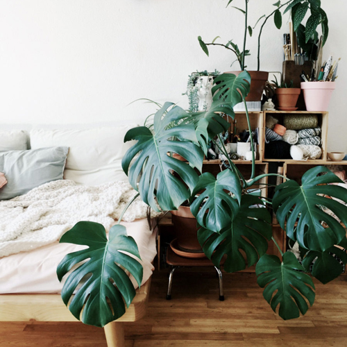 plante-interieur-deco-tendance-2018