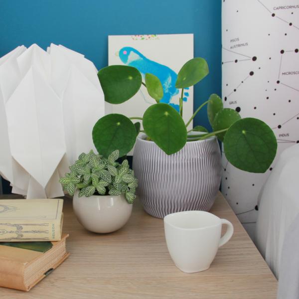 Chambre à coucher : notre sélection de plantes aux vertus apaisantes & dépolluantes