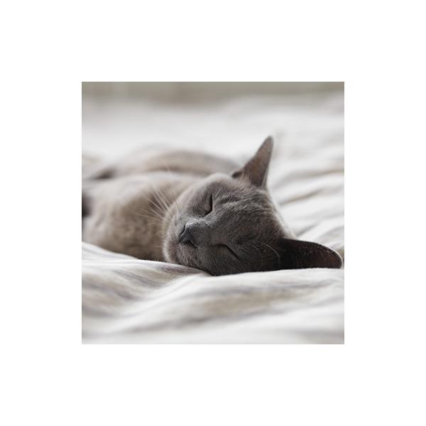 21e Journée du Sommeil : Bien dormir pour mieux faire face